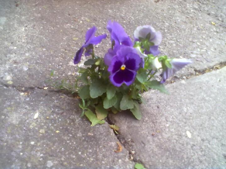 Beton_Blumen