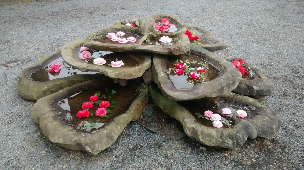 zuschendorf_16_blossoms